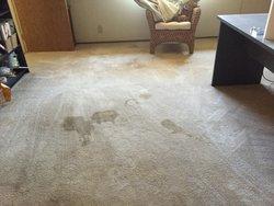 Mega Dry Carpet Cleaning San Diego 2