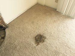Mega Dry Carpet Cleaning San Diego 3