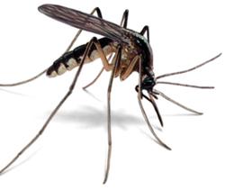 Mosquitor Control & Pest Management Burton 1