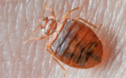 Mosquitor Control & Pest Management Burton 2