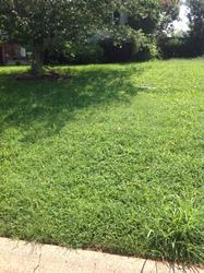 Gilmo Lawn Care Clarksville 10
