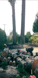 Duran Tree Service LLC Hillsboro 5