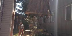 Duran Tree Service LLC Hillsboro 7