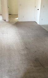 EcoGreen Carpet Care San Francisco 4