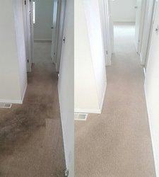 EcoGreen Carpet Care San Francisco 5