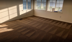 EKO Carpet Cleaning Belmont 3