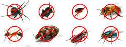 Pest Management Solutions, Inc. Bettendorf 4