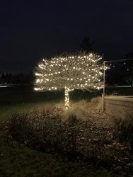 St Nicks Holiday Lighting Fenton 16