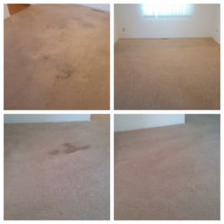 Pristine Carpet Care Longmont 2