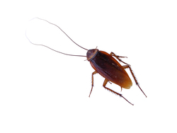 Arsenal Exterminating - Pest and Termite Control Queen Creek 1