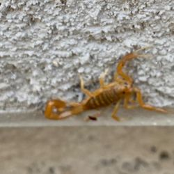 Arsenal Exterminating - Pest and Termite Control Queen Creek 7