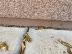 Arsenal Exterminating - Pest and Termite Control Queen Creek 13