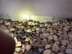 Arsenal Exterminating - Pest and Termite Control Queen Creek 15