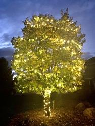 St Nicks Holiday Lighting Fenton 35